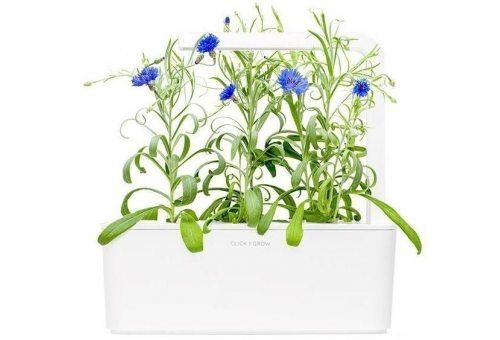 Васильки. Три картриджа для умного сада Smart Garden Click & Grow